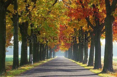 avenue in fall 26 Stock photo © LianeM