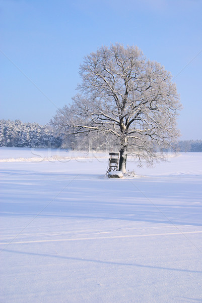 Baum im Winter - tree in winter 05 Stock photo © LianeM