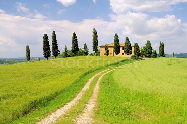 15 árvore grama estrada árvores verde Foto stock © LianeM