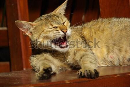 Macska 14 szem száj bőr fej Stock fotó © LianeM