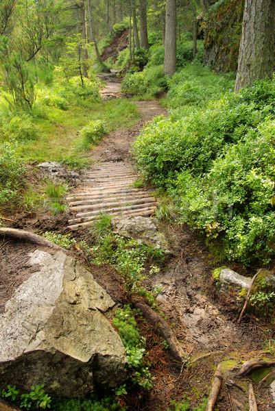 Bataklık ağaç doğa dağ yeşil tepe Stok fotoğraf © LianeM
