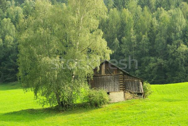 Альпы пастбище дома лес горные Европа Сток-фото © LianeM