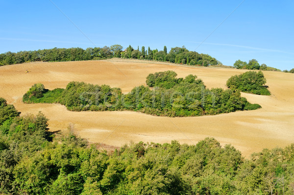 Foto stock: Toscana · hills · cair · natureza · árvores · campo