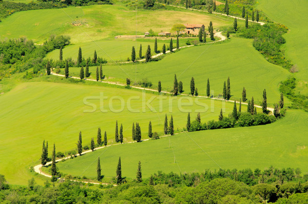 cypress curve 10 Stock photo © LianeM