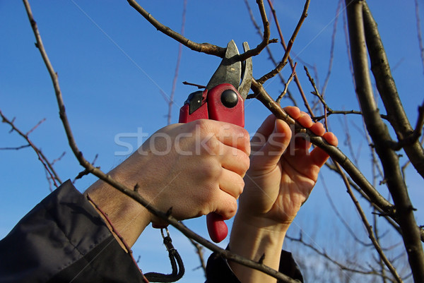 tree cutting 16 Stock photo © LianeM