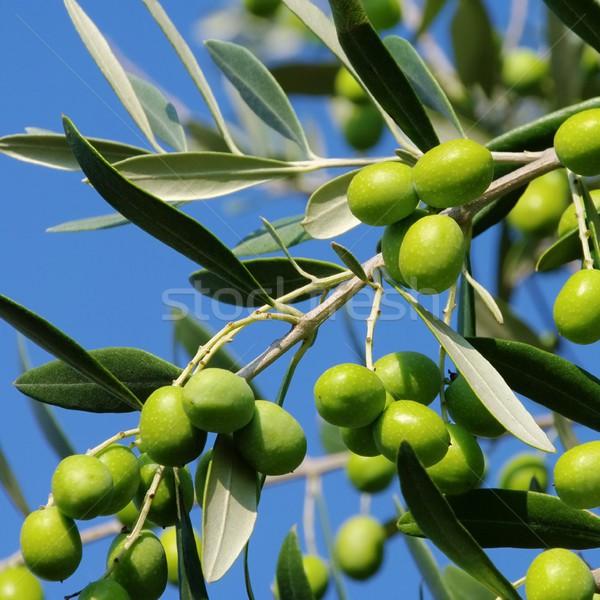 Olive 50 Stock photo © LianeM