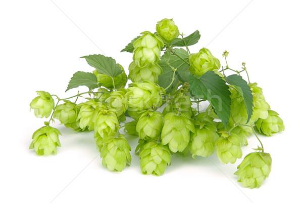 Hop bier tuin achtergrond bladeren plant Stockfoto © LianeM
