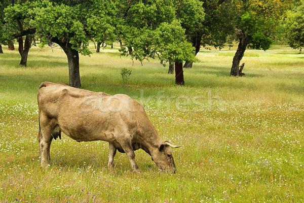 cow 54 Stock photo © LianeM