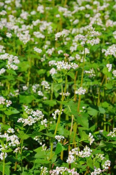 12 цветок медицинской природы области фермы Сток-фото © LianeM
