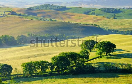 Toscane collines 17 maison arbre herbe Photo stock © LianeM
