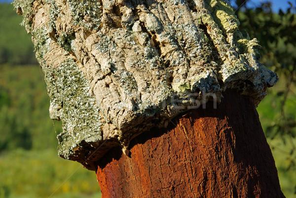cork oak 48 Stock photo © LianeM