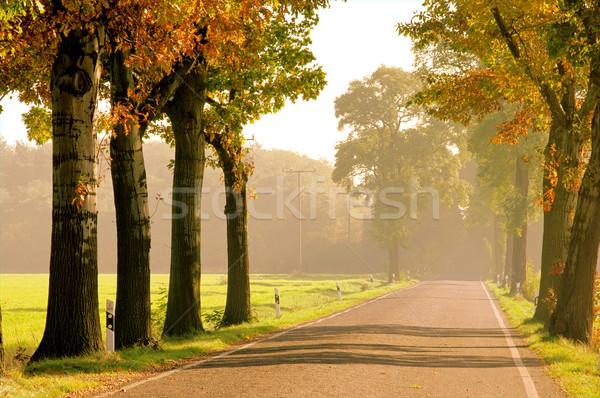 avenue in fall 20 Stock photo © LianeM