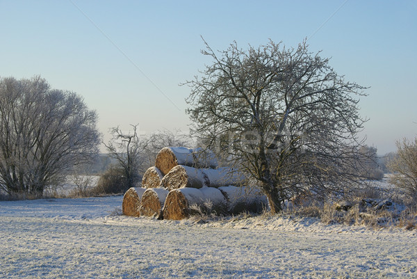 Stock photo: bale of straw in snow