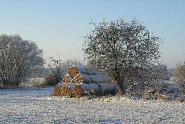 Bela słomy śniegu drzewo dziedzinie lodu Zdjęcia stock © LianeM