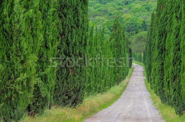 Cyprys krajobraz drzew zielone utwór Hill Zdjęcia stock © LianeM