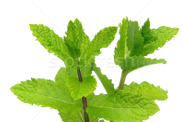 Foto stock: Hortelã-pimenta · planta · fresco · de · macro · saudável