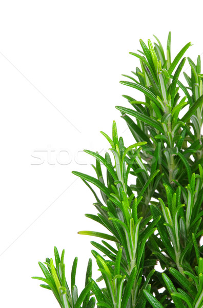 Rosemary isolated 07 Stock photo © LianeM