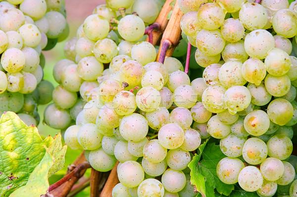 grape white 08 Stock photo © LianeM
