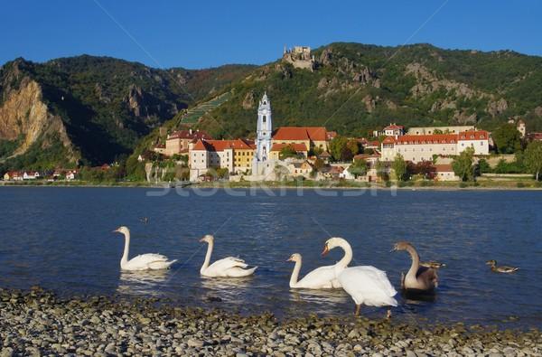 Duernstein with swan  Stock photo © LianeM