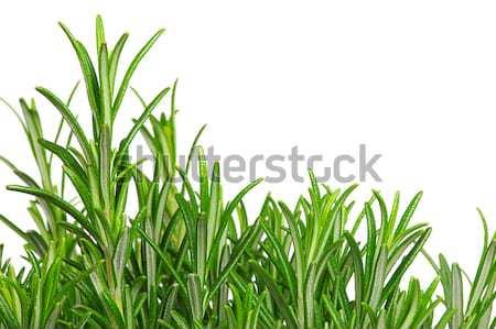 Rosemary isolated 03 Stock photo © LianeM