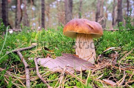 cep 31 Stock photo © LianeM