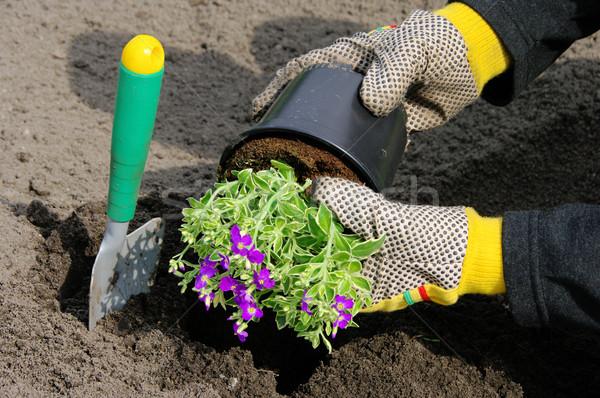shrub planting 16 Stock photo © LianeM