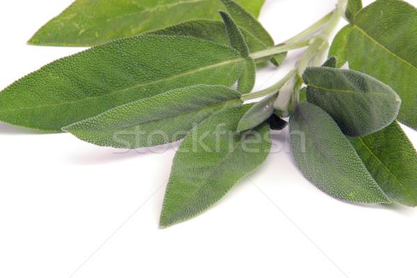 sage leaf 09 Stock photo © LianeM