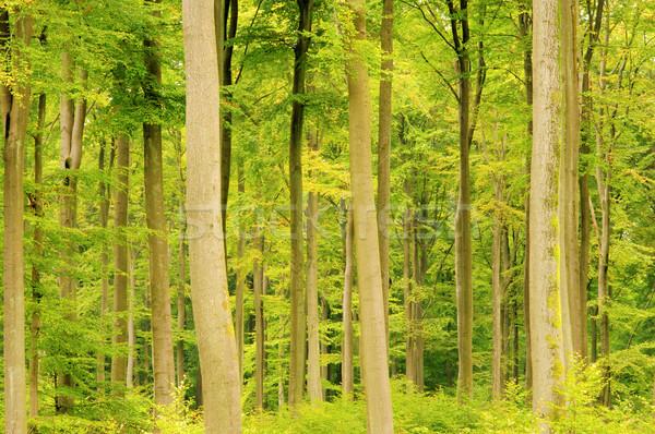 Orman düşmek 14 yaprak Stok fotoğraf © LianeM