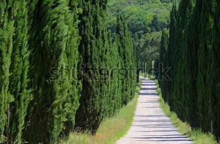 Cyprys krajobraz drzew zielone utwór wzgórza Zdjęcia stock © LianeM