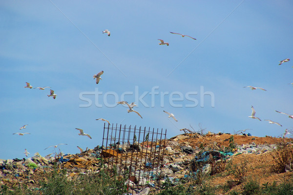 garbage dump 09 Stock photo © LianeM
