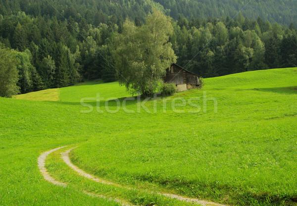 Alps pasture 03 Stock photo © LianeM