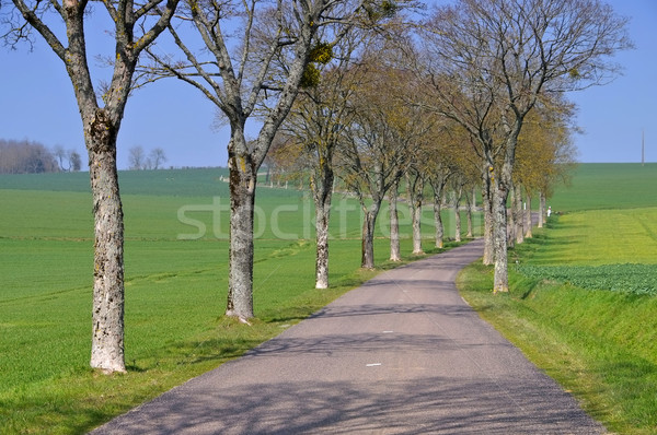 Burgundy, tree-lined road Stock photo © LianeM