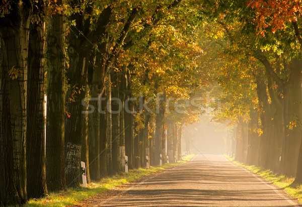 Stock photo: avenue in fall 17