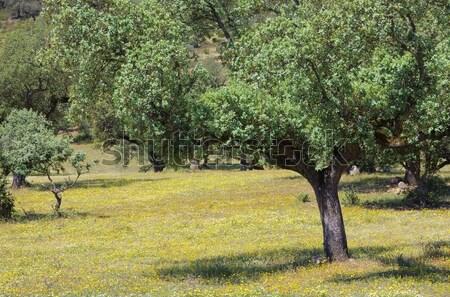 Mantar meşe 19 çiçek ağaç ahşap Stok fotoğraf © LianeM
