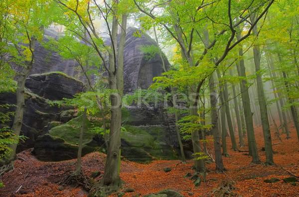 Forestales niebla 12 naturaleza hoja árboles Foto stock © LianeM