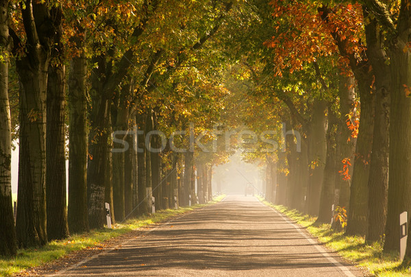 avenue in fall 22 Stock photo © LianeM