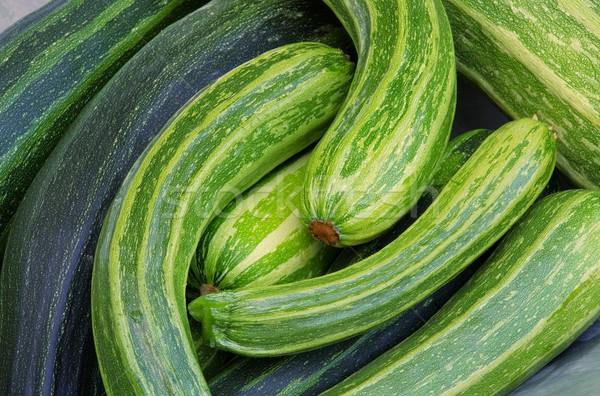 courgette  Stock photo © LianeM