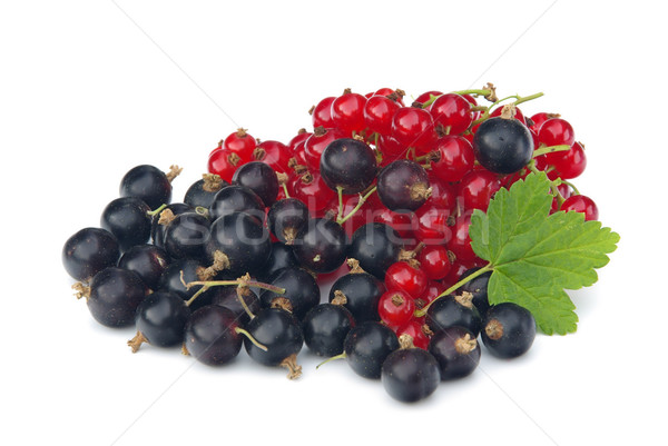 Johannisbeere - currant 18 Stock photo © LianeM