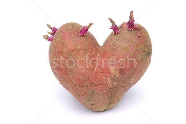 Сток-фото: картофеля · фон · белый · есть · растительное · семени