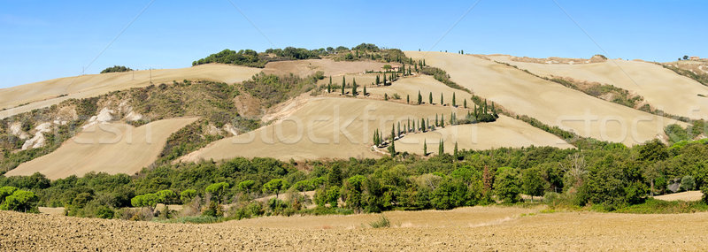 cypress curve in fall 02 Stock photo © LianeM
