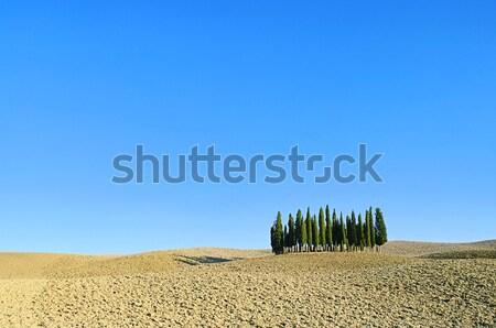 Stock fotó: Toszkána · erdő · ősz · fa · tájkép · nyár