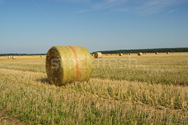 bale of straw 25 Stock photo © LianeM