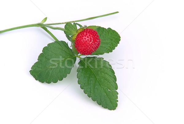 woodland strawberry 01 Stock photo © LianeM