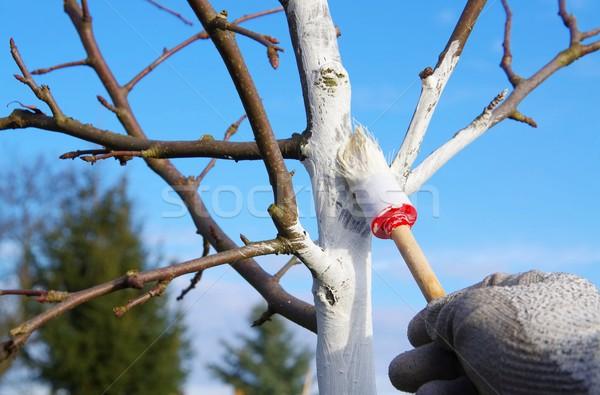 Fa fehérítés kéz gyümölcs tél festmény Stock fotó © LianeM