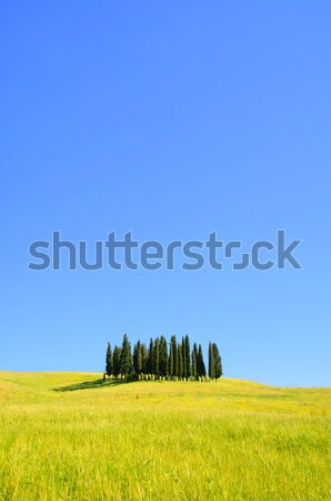 Tuscany forest 03 Stock photo © LianeM