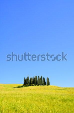Тоскана лес дерево весны трава лет Сток-фото © LianeM
