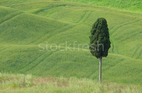 Тоскана природы области фермы холме Сток-фото © LianeM