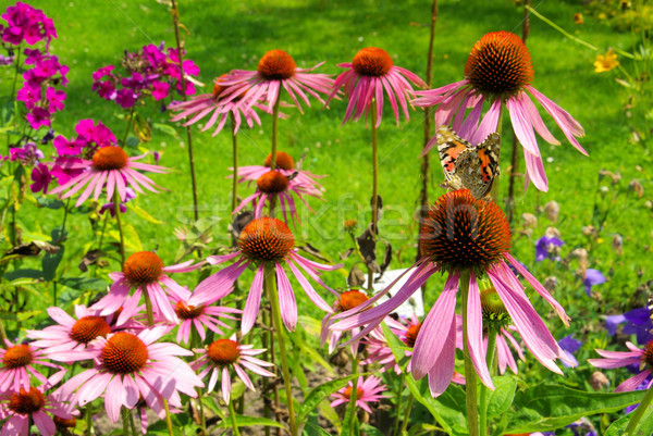 Paars vlinder natuur bladeren Rood plant Stockfoto © LianeM
