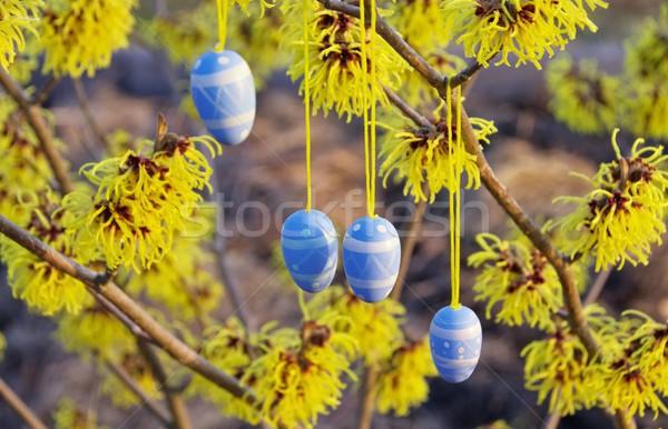 Сток-фото: кустарник · Пасху · время · цветок · саду · яйцо