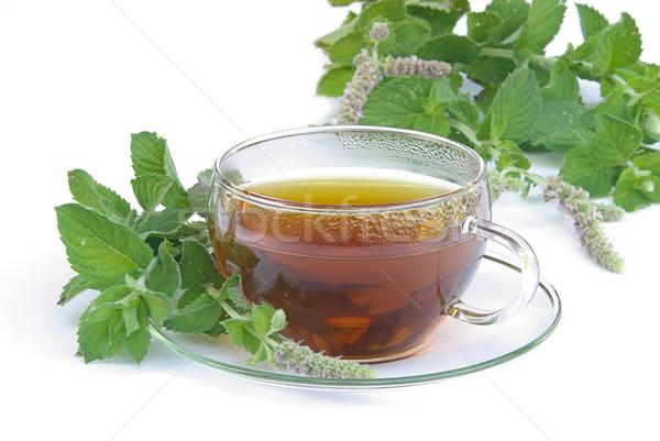 tea Mentha citrata  Stock photo © LianeM